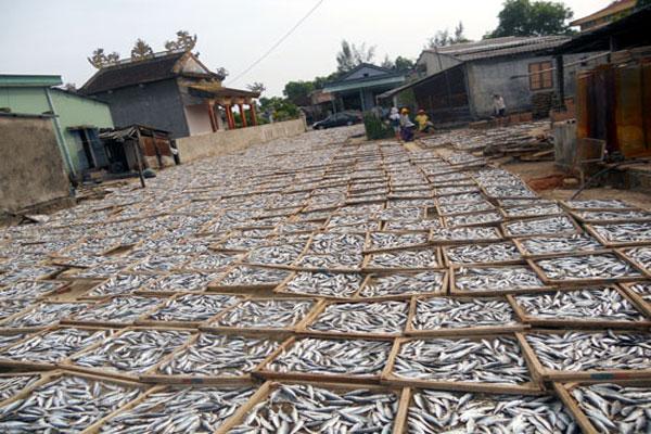 Cá nục đem đi phơi từ 10 giờ sáng đến 4 giờ chiều